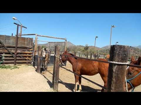 Horse back rinding the AZ Desert