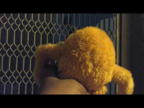 Lerx almost got kipnapp (видео)