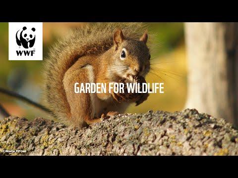 Garden For Wildlife - Episode 6: Edible Native Plants