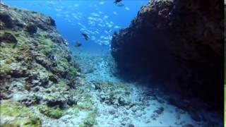 Diving Point: Pedras Secas I