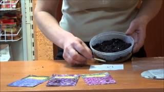 Дельфиниум новозеландский-гигант: выращивание из семян