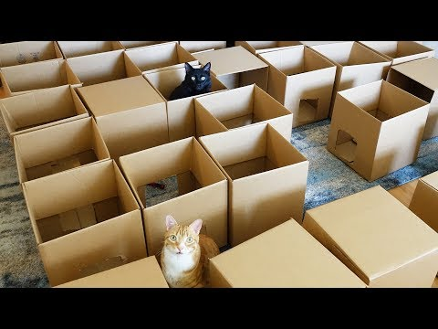 Guy Builds His Cats a Giant Maze Out of 50 Boxes