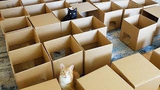 Download Youtube: AMEOW-ZING 50 Box Cat Maze!
