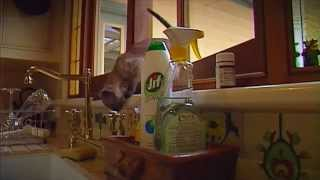 ADVANCE Kitten Care - Inquisitive Kittens