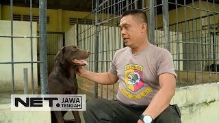 Video Aksi Berani Para Pawang Anjing Pelacak Polrestabes Semarang  - PROFESI SEKITAR KITA MP3, 3GP, MP4, WEBM, AVI, FLV Juni 2018