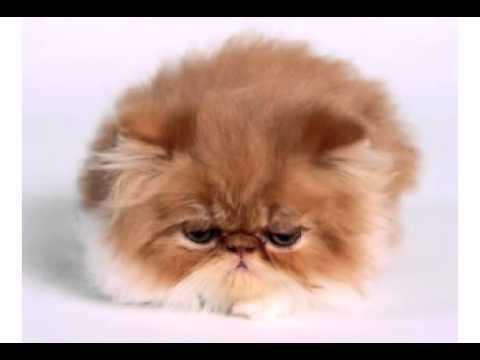 Happy Birthday! Funny Birthday Videos – Mean Kitty