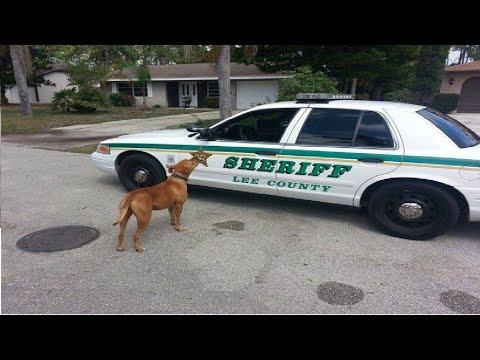 العرب اليوم - استدعت الشرطة لتأخذ هذا الكلب الخطير