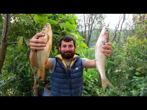 komik Süs Havuzu Balık Avı