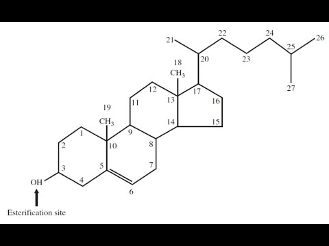 Biochem (Second) - dr.sameer -- Derived lipids & Eicosanoids