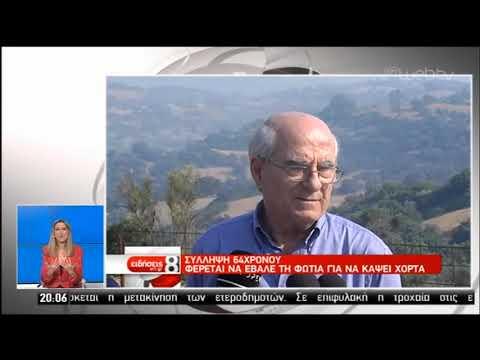 Πύρινος εφιάλτης στο δήμο Κύμης –Αλιβερίου | 05/07/2019 | ΕΡΤ