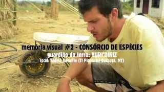 CONSÓRCIO DE ESPÉCIES (multiplica!) memória visual da terra #2