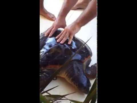 incredibile salvataggio di una tartaruga a lampedusa