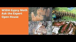 Nonton Gypsy Moth 2016 Webinar Film Subtitle Indonesia Streaming Movie Download