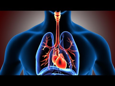 Respiratory System: Facts, Function and Diseases