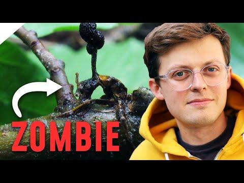 Wie Parasiten ihre Opfer in Zombies verwandeln