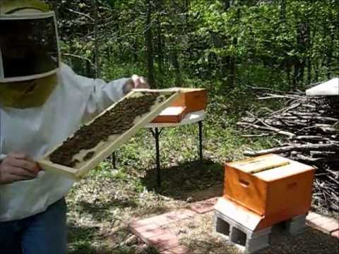 Backyard Beekeeping Part 7: Hive Inspection