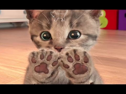 My Favorite Cat Little Kitten Pet Care  Play Cat Care Games for Baby Toddlers and Children