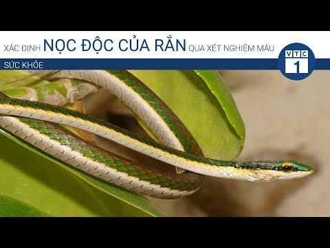 Xác định nọc độc của rắn qua xét nghiệm máu | VTC1 - Thời lượng: 2 phút, 32 giây.