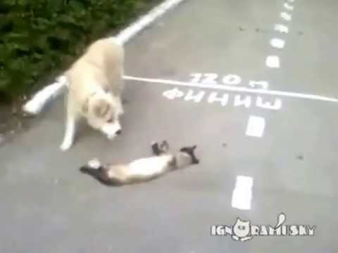 Amazing Dog  Cry Because Cat Died
