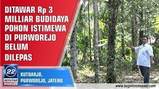 Video Ditawar Rp 3 Milliar Budidaya Pohon Istimewa Di Purworejo Belum Dilepas MP3, 3GP, MP4, WEBM, AVI, FLV Agustus 2018
