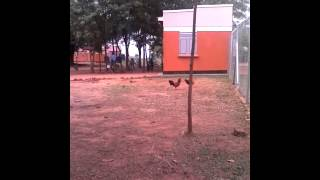 Nonton Bull Cock Wrestling Film Subtitle Indonesia Streaming Movie Download