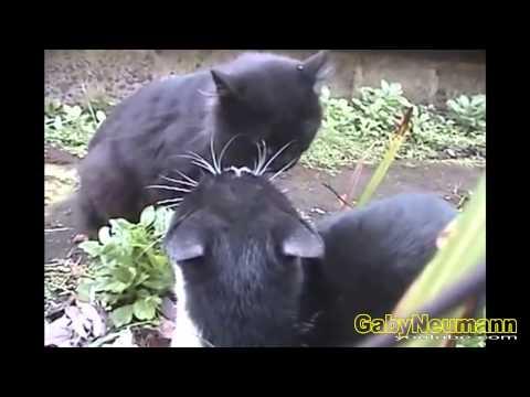 Lustige Videos Zum Totlachen _ Lustige Katzen Videos _ Witzige Katzen #22