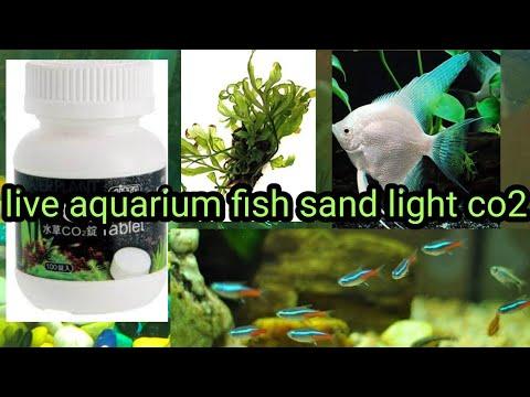 live aquarium fish plants nutrition light soil sand