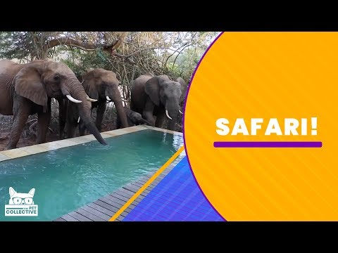 Funny Moments Caught While on Safari