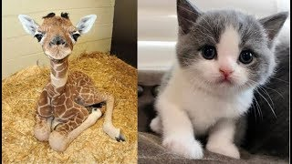 Video Cute baby animals Videos Compilation cute moment of the animals - Soo Cute! #23 MP3, 3GP, MP4, WEBM, AVI, FLV September 2018