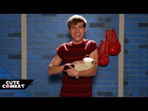 Boston? More Like BESTon Terrier Vs. Raw Diet – Cute Combat Ep. 4