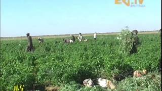 Agriculture Support by Eritrean Military in Haikota Sub Zone Project
