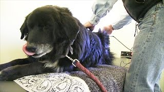 Healing Dogs with Chiropractic