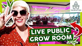 NEW DISPENSARY WITH LIVE PUBLIC GROW ROOM 🌿 The Artist Tree Tour by That High Couple