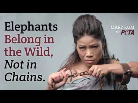 Mary Kom Wants Elephants out of Circuses