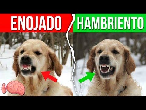 10 formas de entender lo que dice tu perro