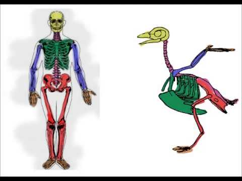 comparison between cat and human skeleton 20 differences between cats and humans what is the difference between human and cat years of age whats the difference between cat and human.