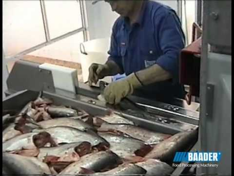 Baader Pangasius processing machines
