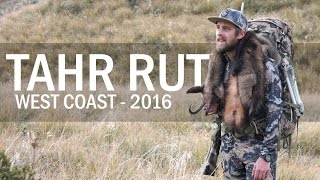 Nonton Chasing Trophy Bull Tahr   West Coast Rut 2016 Film Subtitle Indonesia Streaming Movie Download
