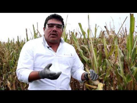 Conoce al equipo de Monsanto en el centro de México