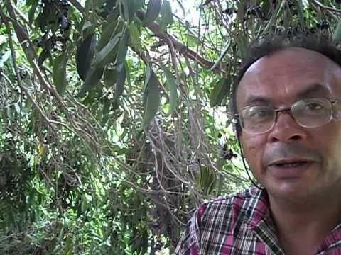Geraldo Belo em Bananeiras PB . diariodobrejo.com