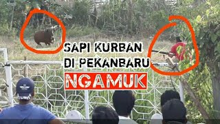 Video Sniper Riau Sukses Jinakkan Hewan Kurban Mengamuk MP3, 3GP, MP4, WEBM, AVI, FLV Mei 2018