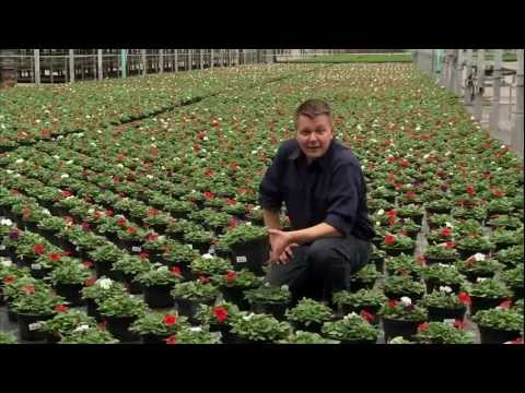 Flower Greenhouse Farmer