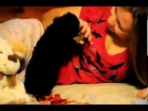 Christmas Girl playing with my kid