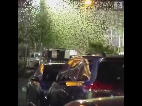 Γέμισε ο ουρανός ακρίδες στη Νεβάδα των ΗΠΑ