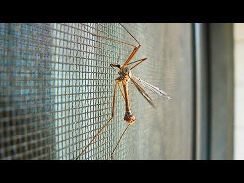 Укусы комаров лечение в домашних условиях у ребенка