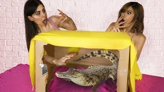 Video Whats in the Box Challenge with LIVE ANIMALS !! MP3, 3GP, MP4, WEBM, AVI, FLV September 2018