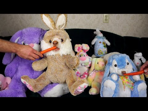 Stuffed Bunnies Come to Life Funny Dogs Maymo