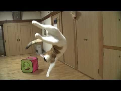 Des chats en slow-motion