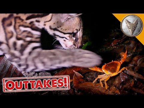 Ocelot vs Crab