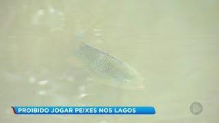 Bauru: laudo aponta que peixes encontrados mortos no Vitória Régia tinham sido soltos no lago